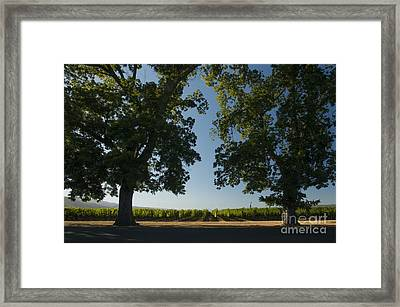Two Old Friends Framed Print