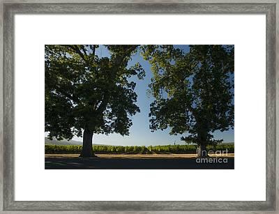 Two Old Friends Framed Print by Jon Neidert