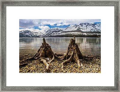 Two Old Friends Framed Print by Mitch Shindelbower