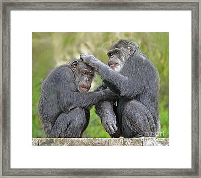 Two Old Love Birds Taking Care Of Each Other Framed Print by Jim Fitzpatrick
