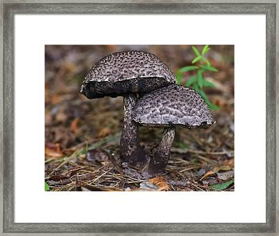 Two Old Man In The Woods Mushrooms Framed Print