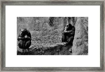 Two On A Ledge Framed Print by Pamela Blizzard