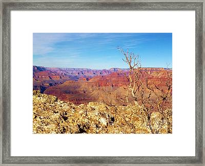 Two One Hundred Eighty Two Framed Print by Debbie L Foreman