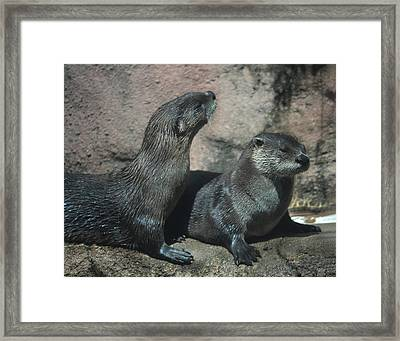 Two Otters Framed Print