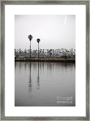 Two Palms Framed Print by Amanda Barcon