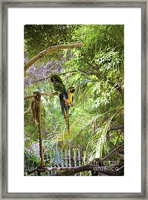 Two Parrots Framed Print