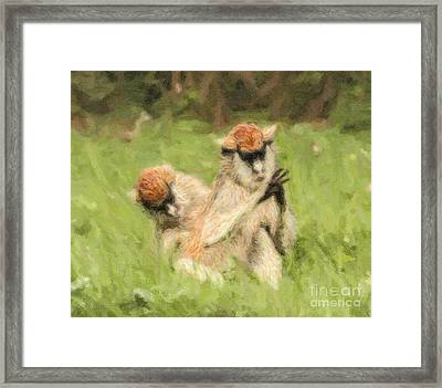 Two Patas Monkeys Erythrocebus Patas Grooming Framed Print by Liz Leyden