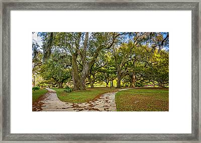Two Paths Diverged In A Live Oak Wood...  Framed Print by Steve Harrington