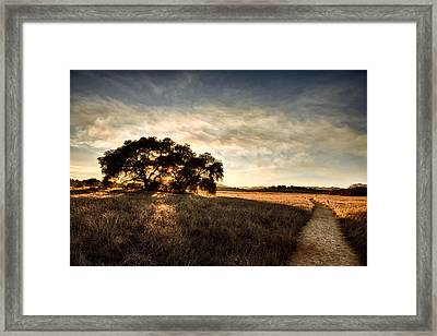 Two Paths Framed Print by Peter Tellone