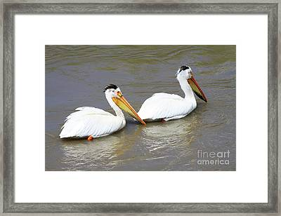 Framed Print featuring the photograph Two Pelicans by Alyce Taylor