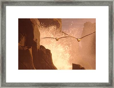Two Pelicans Combing The Rocks Framed Print