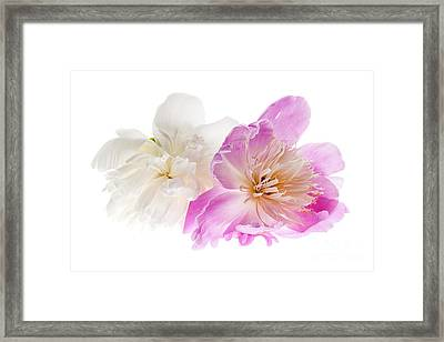 Two Peony Flowers Framed Print by Elena Elisseeva