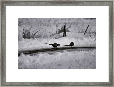 Two Pheasants Framed Print by Thomas Young