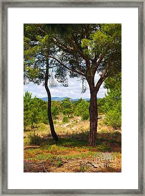 Two Pine Trees Framed Print