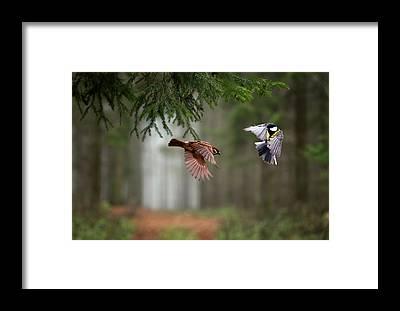 Bird Strike Framed Prints
