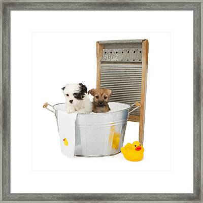 Two Puppies Taking A Bath Framed Print by Susan Schmitz
