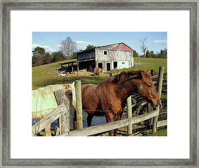 Two Quarter Horses In A Barnyard Framed Print