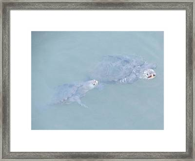 Two Rare Turtles Swam Up To See Framed Print by Debbie Nester