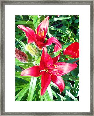 Two Red Flowers Framed Print