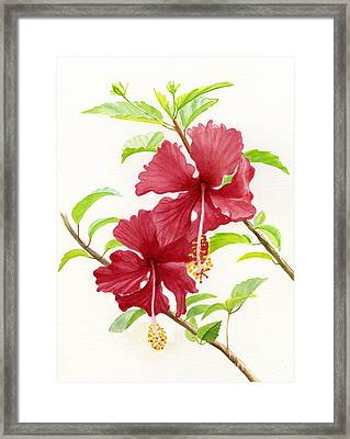 Two Red Hibiscus Flowers Framed Print by Sharon Freeman