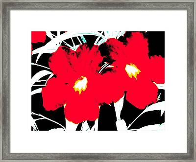 Two Red Jack Flowers Framed Print by David Clark