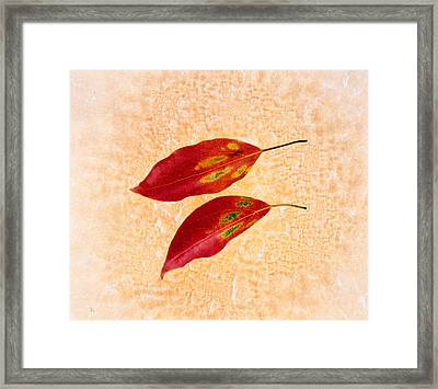 Two Red Leaves On Pink Background Framed Print