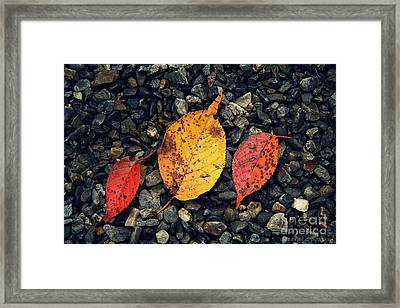 Two Reds And A Yella Framed Print