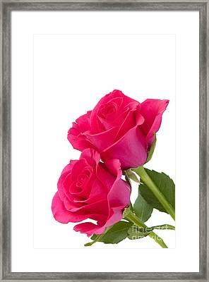 Two Roses Framed Print by Anne Gilbert