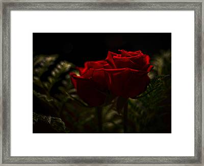 Two Roses For Our Anniversary Framed Print by Ronda Broatch