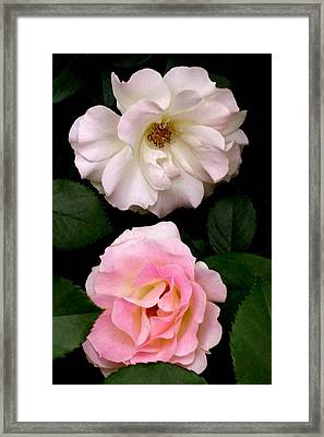 'two Roses' Framed Print