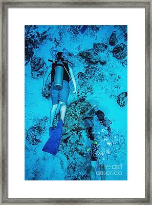 Two Scuba Divers Swimming_ Cozumel, Mexico Framed Print