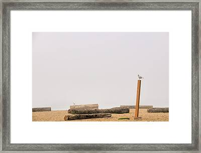 Two Seagull Solitudes Framed Print by Doug Farmer