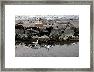 Two Seagulls Framed Print