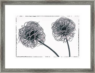 Two Seeds Framed Print