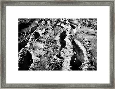 two sets of fresh footprints crossing deep snow in field Forget Saskatchewan Canada Framed Print by Joe Fox