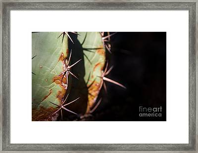 Two Shades Of Cactus Framed Print by John Wadleigh