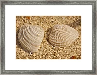 Two Shells Framed Print by Adam Romanowicz