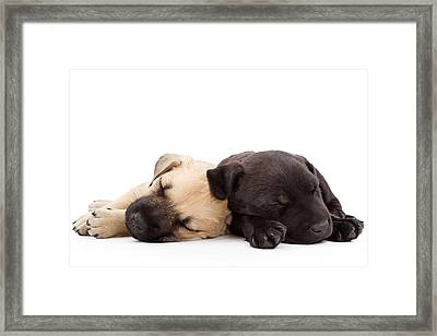 Two Sleeping Puppies Laying Together  Framed Print by Susan Schmitz