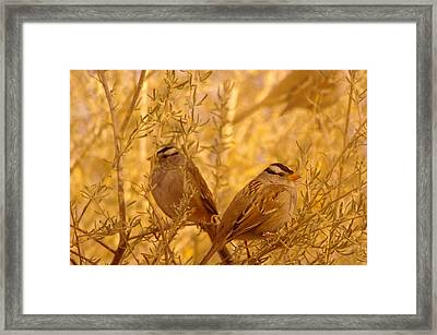 Two Small Birds Framed Print