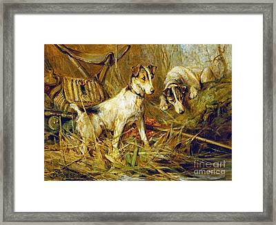 Two Smooth-haired Fox Terriers Framed Print by Celestial Images