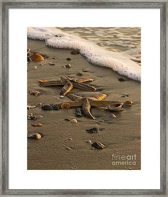 Two Stars Framed Print by Carrie Cranwill