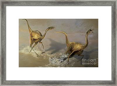 Two Struthiomimus Chasing Each Other Framed Print by Jan Sovak