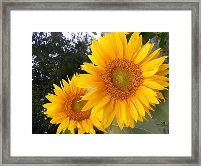 Two Sunflowers Framed Print