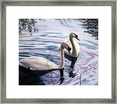 Two Swans A Swimming Framed Print by Sandra Chase