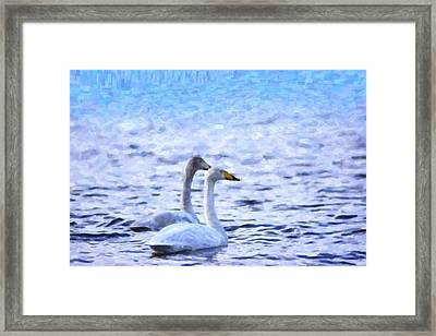 Two Swans Swimming Framed Print