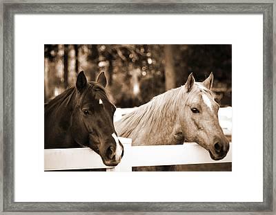 Two Sweet Horses Framed Print