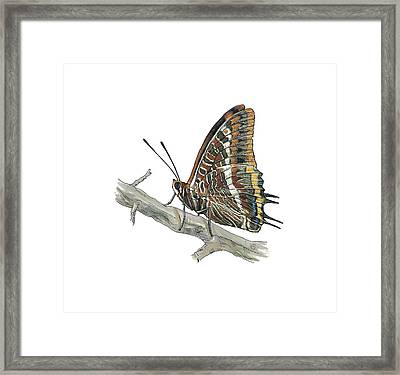 Two-tailed Pasha Butterfly, Artwork Framed Print by Science Photo Library