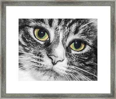 Two Toned Cat Eyes Framed Print