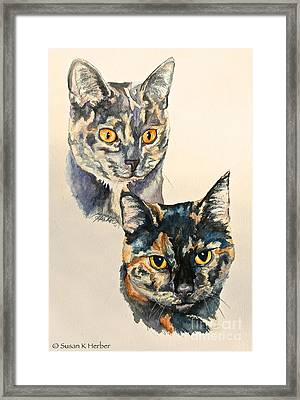 Two Torti's Framed Print