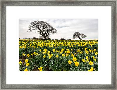 Two Trees Framed Print by Adrian Evans